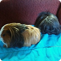 Adopt A Pet :: Renee &Silkie - San Antonio, TX