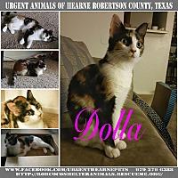 Adopt A Pet :: Dolla - Hearne, TX