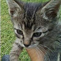 Adopt A Pet :: Kane - Elgin, OK