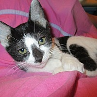 Adopt A Pet :: Valerie - Flower Mound, TX