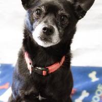 Adopt A Pet :: Nikki - New Freedom, PA