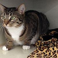Adopt A Pet :: Zoey G. - Orlando, FL