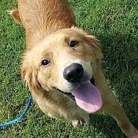 Adopt A Pet :: Phoenix ADOPTION PENDING - Pottstown, PA