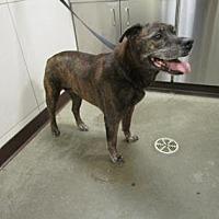 Adopt A Pet :: Deogee - Colfax, IL