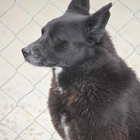 Adopt A Pet :: Little Bear - Jewett City, CT