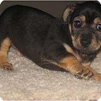 Adopt A Pet :: Regis - Bakersfield, CA