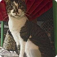 Adopt A Pet :: George - Hyde Park, NY