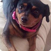 Adopt A Pet :: Jasmine - Oceanside, CA