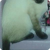 Adopt A Pet :: Ronan - Whittier, CA