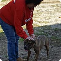 Adopt A Pet :: Rocko - Henderson, KY