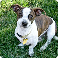 Adopt A Pet :: Kevin - Bellflower, CA