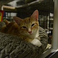 Adopt A Pet :: Roxanne - Land O Lakes, FL