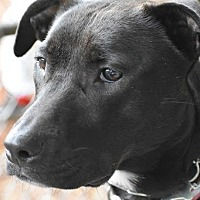 Adopt A Pet :: Luna - Potomac, MD