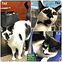 Adopt A Pet :: T.J. & Taz - Oakville, ON