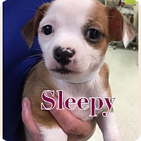 Adopt A Pet :: Sleepy - Va Beach, VA