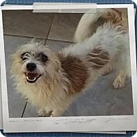 Adopt A Pet :: Daisy Mae - Mesa, AZ