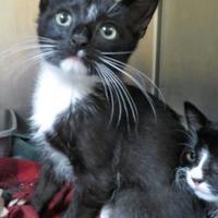Adopt A Pet :: Terrance - Menomonie, WI