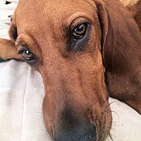Adopt A Pet :: Lizzie - Dallas, TX