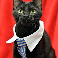 Adopt A Pet :: Jonathan171399 - Atlanta, GA