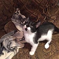 Adopt A Pet :: Tommy - Cranford/Rartian, NJ