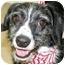 Photo 1 - Border Collie/Terrier (Unknown Type, Medium) Mix Dog for adoption in Cincinnati, Ohio - Flip