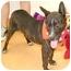 Photo 3 - Dutch Shepherd Mix Dog for adoption in Cincinnati, Ohio - Bridge