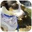 Photo 3 - Rat Terrier Mix Dog for adoption in Sulphur Springs, Texas - Winnie