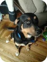 Rottweiler/Husky Mix Dog for adoption in Edon, Ohio - Jackson