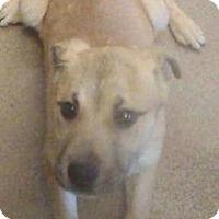 Adopt A Pet :: Jake - Santa Barbara, CA
