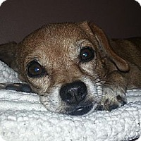 Adopt A Pet :: Reecie (gentle!) - Chicago, IL
