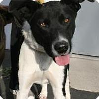 Adopt A Pet :: Billie - Canoga Park, CA
