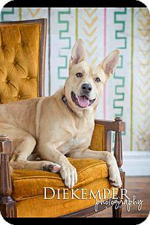 German Shepherd Dog Mix Dog for adoption in Vandalia, Illinois - Bear