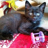 Adopt A Pet :: Kohl - Monroe, NC