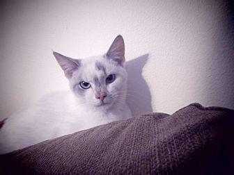 Domestic Shorthair Cat for adoption in Hazard, Kentucky - Peaches