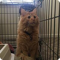 Adopt A Pet :: Andy - Stafford, VA