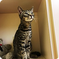 Adopt A Pet :: Darian - North Wilkesboro, NC