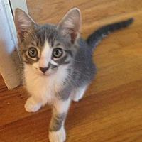 Adopt A Pet :: Tuxi - Fullerton, CA