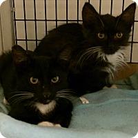 Adopt A Pet :: SOCKS & TINY - Los Angeles, CA