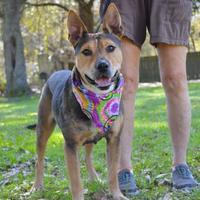 Adopt A Pet :: Otto - Lafayette, LA