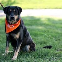 Adopt A Pet :: Roxie - Clay Center, KS