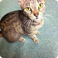 Adopt A Pet :: Mommy Mia (adult female) - Harrisburg, PA