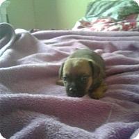 Adopt A Pet :: Yogi - Antioch, CA