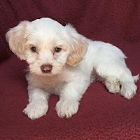 Adopt A Pet :: Dalton - Los Angeles, CA