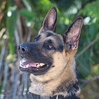Adopt A Pet :: Rango - San Diego, CA