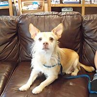 Adopt A Pet :: Jack - Southington, CT