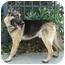 Photo 4 - German Shepherd Dog Mix Dog for adoption in Los Angeles, California - Alex von Brussels
