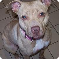 Adopt A Pet :: Cinnamon - Jackson, MI