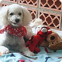 Adopt A Pet :: Teddy - Calgary, AB