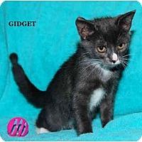Adopt A Pet :: Gidget - Catasauqua, PA
