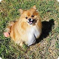 Adopt A Pet :: BRODY - Hesperus, CO